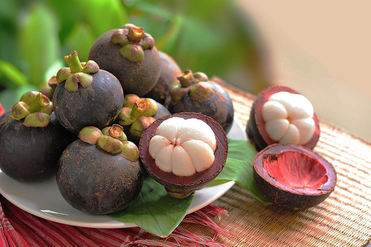 MANGOSTEEN – THE QUEEN OF TROPICAL FRUIT
